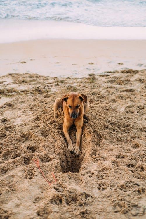 Hund gräbt-2252311